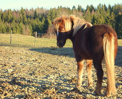 Subsequent Photograph - The Horse Is Waiting For The Green Grass To Come  by Hilde Widerberg