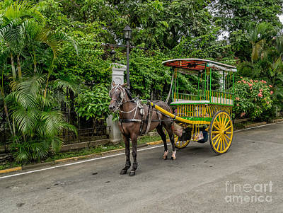 Photograph - Horse Drawn by Adrian Evans