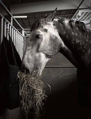 Personalized Name License Plates - Horse Eating Hay by Joseph Skompski