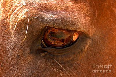 Photograph - Horse Eye by Adam Jewell