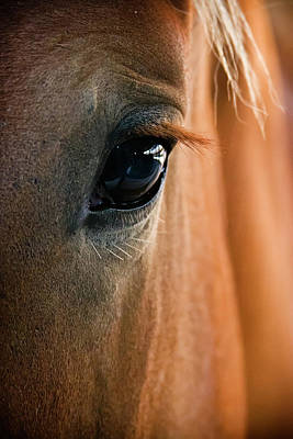 Horse Photograph - Horse Eye by Adam Romanowicz