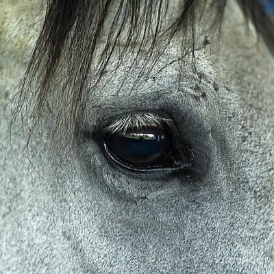 Horse Eye Art Print by John Greim