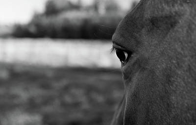 Photograph - Horse Eye by Michael Thibault