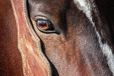 Quarter Horses Photograph - Horse Eye by Todd Klassy