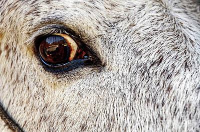 Photograph - Horse Eyed by Paul Mashburn