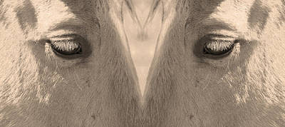 Photograph - Horse Eyes Love Sepia by James BO Insogna