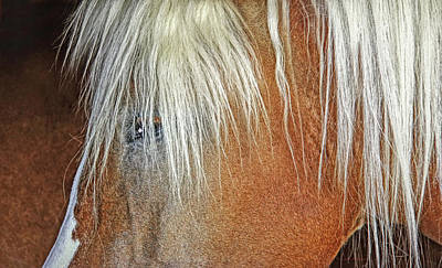 Photograph - Haflinger Horse Facial Abstract by Jennie Marie Schell