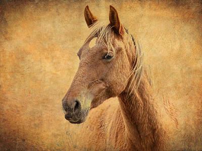 Photograph - Horse Fade by Steve McKinzie