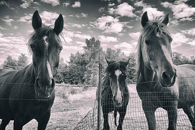 Photograph - Horse Family by Jason Butts
