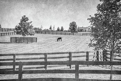 Photograph - Horse Farm B/w by Pamela Williams