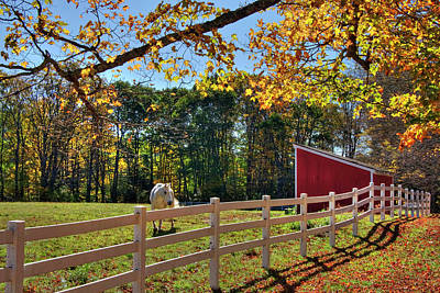 Photograph - Horse Farm In Autumn - Surry Nh by Joann Vitali