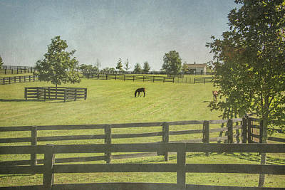 Photograph - Horse Farm by Pamela Williams