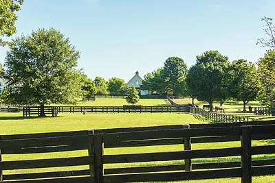 Photograph - Horse Farming by Pamela Williams