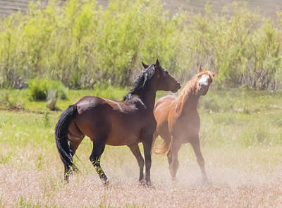 Photograph - Horse Fight by Marc Crumpler