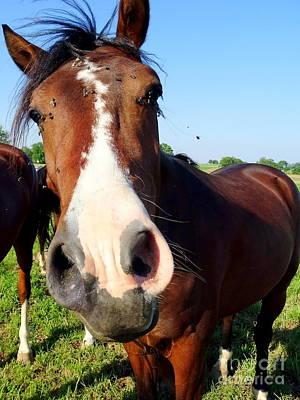 Photograph - Horse Flies #2 by Ed Weidman