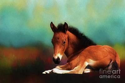 Digital Art - Horse Foal by Suzanne Handel