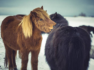 Photograph - Horse Friends Forever by Benjamin Wiedmann
