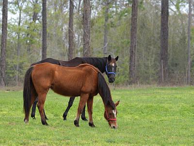 Photograph - Horse Friends by rd Erickson