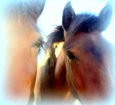 Young And Curious Horses Waiting For Anything To Happen Art Print by Hilde Widerberg