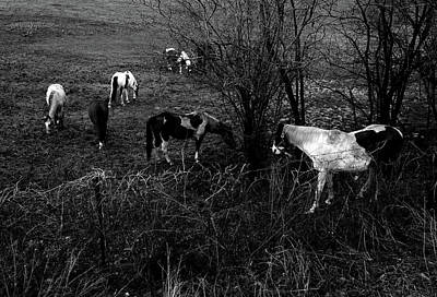 Photograph - Horse Gathering by Christine Montague