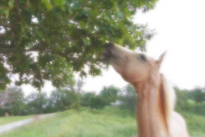 Horse Grazes In A Tree Art Print by Jana Russon