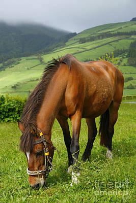Horse Grazing Original by Gaspar Avila