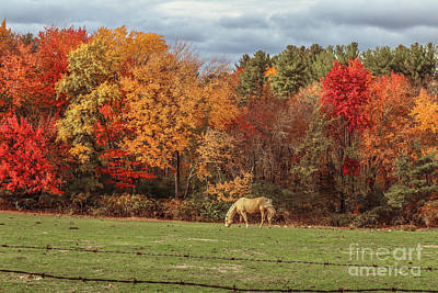 Photograph - Horse Grazing On Farmland by Claudia M Photography