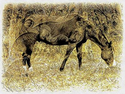 Photograph - Horse Grazing On Pasture 1 by Dorothy Berry-Lound