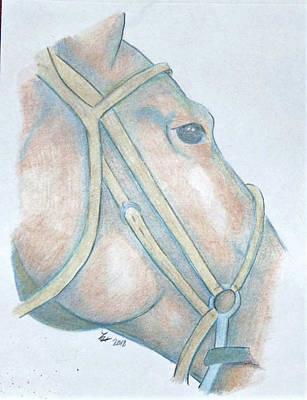 Animals Drawings - Horse head by Loretta Nash