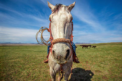 Horse Bridle Photograph - Horse Head by Todd Klassy