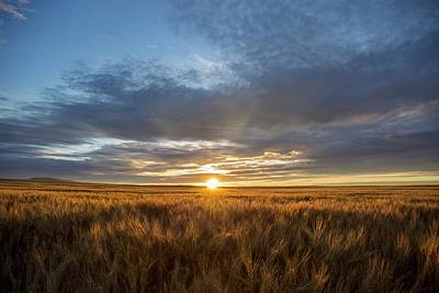 Photograph - Horse Heaven Wheat Sunrise by Lynn Hopwood
