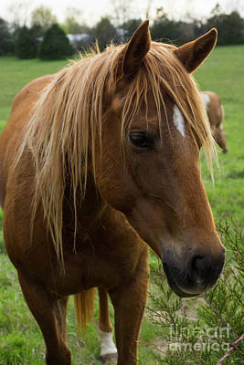 Photograph - Horse Hello by Jennifer White