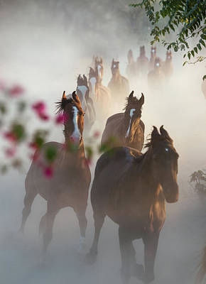 Photograph - Horse Herd Coming Home by Ekaterina Druz
