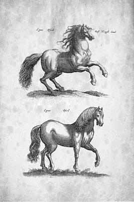 Horse Historiae Naturalis 1657 Print by Aged Pixel