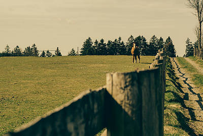 Horse In A Pasture Art Print by Pati Photography