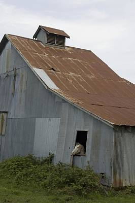 Photograph - Horse In Barn by Sara Stevenson