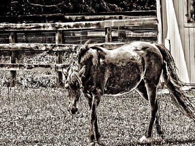 Photograph - Horse In Black And White by Annie Zeno