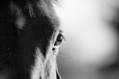 Focus On Foreground Photograph - Horse In Black And White by Malcolm MacGregor