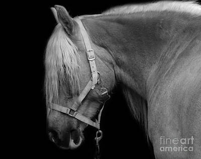 Photograph - Horse In Black And White by Mim White