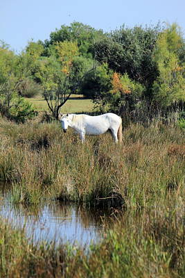 Photograph - Horse In Camargue, France by Elenarts - Elena Duvernay photo