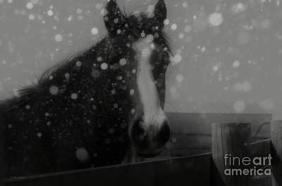 Horse In Falling Snow Art Print