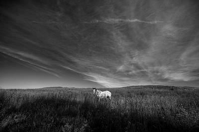 Digital Art - Horse In Field 2 by Patrick Groleau