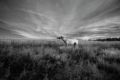 Digital Art - Horse In Field 3 by Patrick Groleau