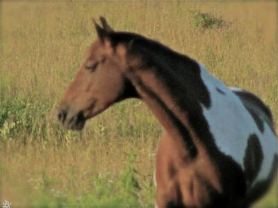 Horse In The Run Photograph - Horse In Field by Debra     Vatalaro