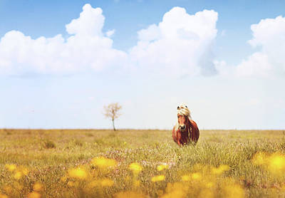 Blue And Yellow Wall Art - Photograph - Horse In Field by Elena Kovalenko