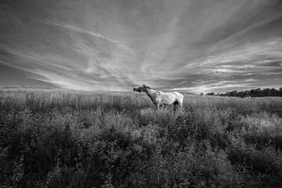 Digital Art - Horse In Field I by Patrick Groleau