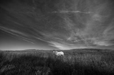 Digital Art - Horse In Field II by Patrick Groleau
