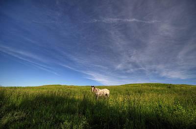 Digital Art - Horse In Field IIi by Patrick Groleau