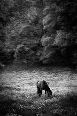 Horse Photograph - Horse In Flowers In Black And White by Greg Mimbs