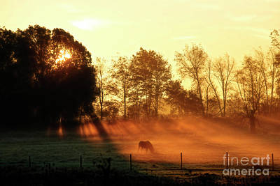 Photograph - Horse In Fog At Daybreak by David Arment